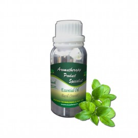 Essential Oil Basil (sweet) - 100 g