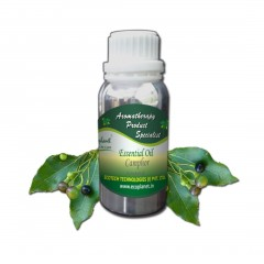 Essential Oil Camphor 100 g