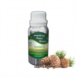 Essential Oil Cedarwood 100 g