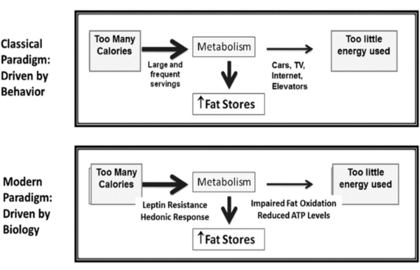 biology of obesity